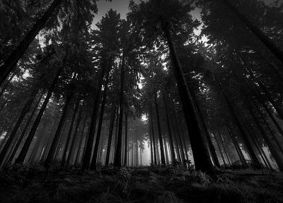 black and white, landscapes, nature, trees - random desktop wallpaper