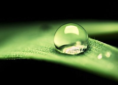 water, nature, leaves, water drops, macro - desktop wallpaper