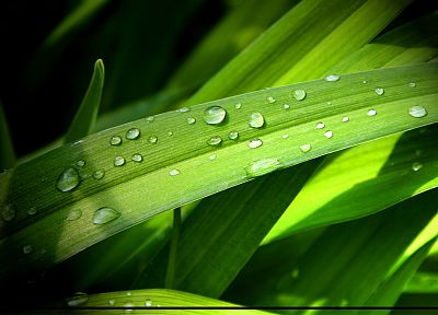 leaves, grass, water drops - random desktop wallpaper