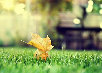 green, nature, leaves, grass, tilt-shift - random desktop wallpaper