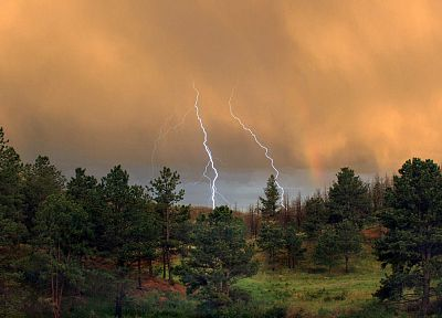nature, trees, forests, storm, lightning - random desktop wallpaper