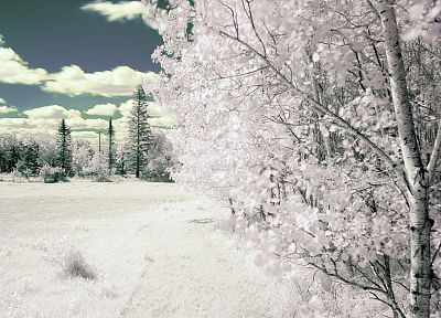 winter, snow, trees, frozen - random desktop wallpaper