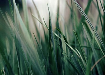 grass, macro - random desktop wallpaper