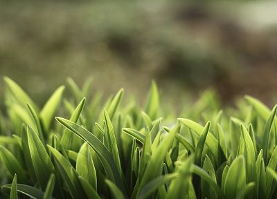 green, nature, grass, macro, depth of field - related desktop wallpaper