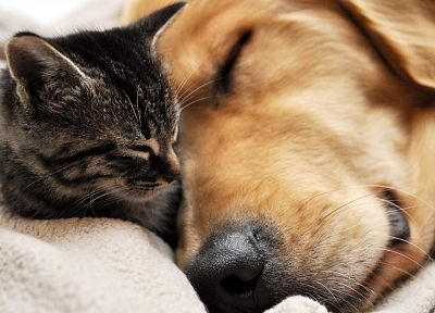 cats, animals, dogs, sleeping - related desktop wallpaper