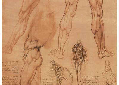 anatomy, Leonardo da Vinci - desktop wallpaper