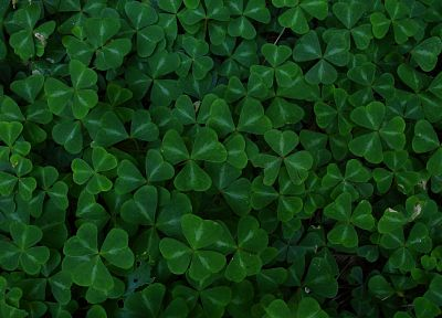 green, leaf, clover - desktop wallpaper