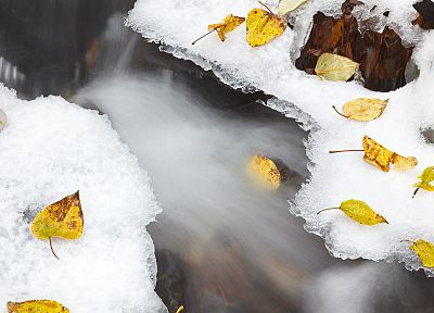 nature, snow, leaves, national, scenic, Oregon, fallen leaves - random desktop wallpaper