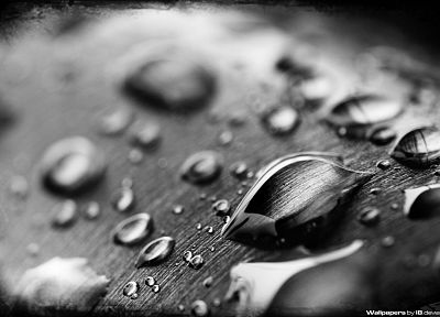 water, wet, liquid, water drops, condensation, drops - random desktop wallpaper