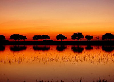 sunset, landscapes, nature, trees, lakes, reflections - related desktop wallpaper