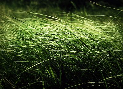 grass, Earth, typography - related desktop wallpaper