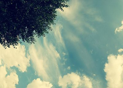 clouds, trees - related desktop wallpaper