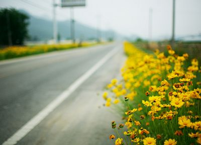 landscapes, flowers, roads, depth of field, yellow flowers - related desktop wallpaper