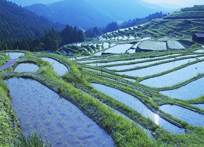 water, mountains, landscapes, fields, rice, terrace, hillside - related desktop wallpaper