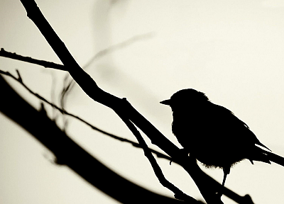 birds, silhouettes, grayscale, branches, white background - desktop wallpaper