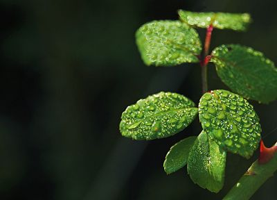 nature, leaves - popular desktop wallpaper