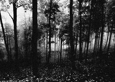 trees, forests, grayscale, monochrome, spiders, Gloom - related desktop wallpaper