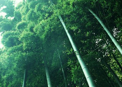 nature, forests, bamboo, woods - random desktop wallpaper