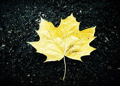 nature, leaves, maple leaf, fallen leaves - random desktop wallpaper