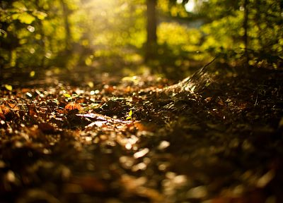 nature, forests, bokeh, depth of field, fallen leaves - random desktop wallpaper