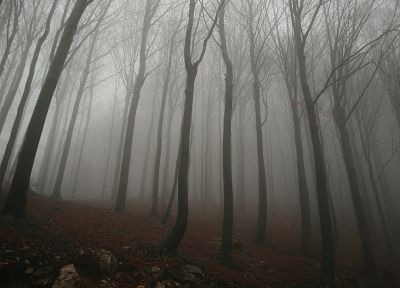 trees, fog, mist, woods - related desktop wallpaper