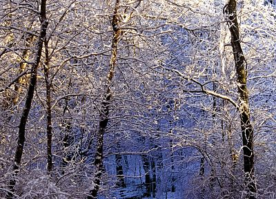light, nature, winter, forests, falls, Tennessee, trail, morning - random desktop wallpaper