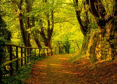 trees, autumn, forests, paths - desktop wallpaper