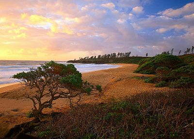 ocean, clouds, landscapes, nature, trees, shore, beaches - related desktop wallpaper