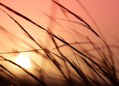 sunset, nature, grass, plants, macro - related desktop wallpaper