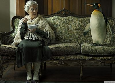 women, couch, old, funny, penguins - related desktop wallpaper