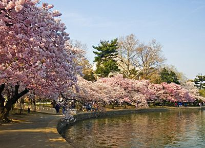 cherry blossoms, lakes - popular desktop wallpaper