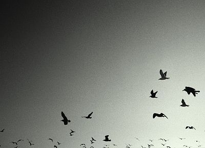 Nine Inch Nails, birds, grey, crows - random desktop wallpaper