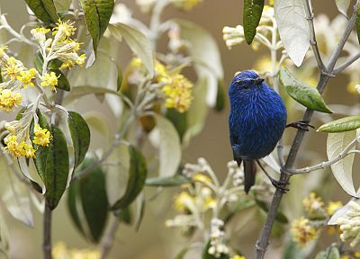 nature, flowers, birds, yellow flowers, Tanagers - related desktop wallpaper