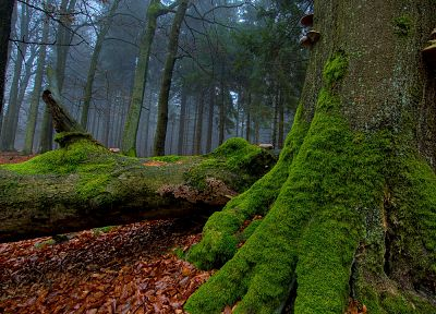 nature, trees, forests, leaves, woods, moss, logs - related desktop wallpaper