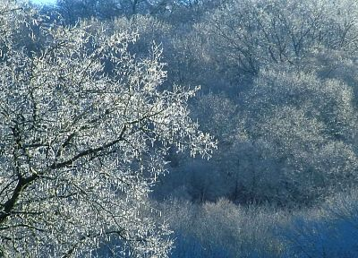 ice, trees, Tennessee, parks - related desktop wallpaper
