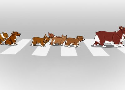 animals, Cowboy Bebop, dogs, puppies, Corgi, crosswalks, street, Ein (Cowboy Bebop) - random desktop wallpaper