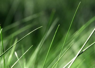 green, nature, grass, macro - random desktop wallpaper