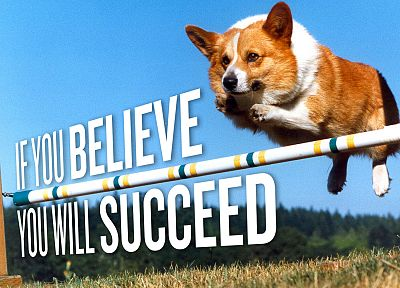 animals, dogs, Corgi, motivation - related desktop wallpaper
