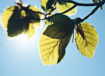 nature, leaves, sunlight, skyscapes - random desktop wallpaper