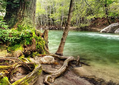nature, forests, woods, streams, HDR photography - random desktop wallpaper