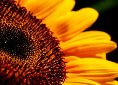 Sun, flowers, sunflowers - desktop wallpaper