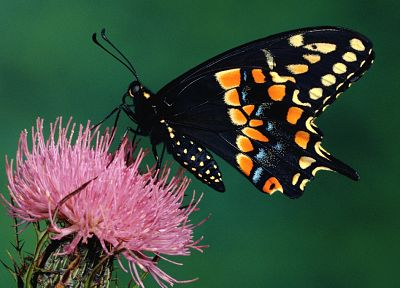 animals, insects, butterflies - related desktop wallpaper