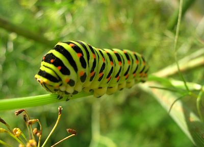 insects, caterpillars, bugs - random desktop wallpaper