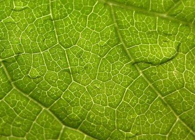 nature, leaf, leaves, macro - desktop wallpaper