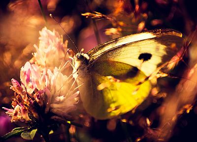 nature, butterflies - random desktop wallpaper