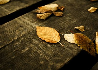 leaf, autumn, wood - desktop wallpaper