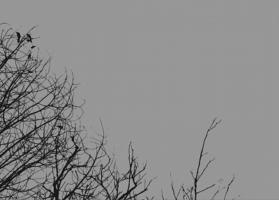 minimalistic, trees, gray - desktop wallpaper