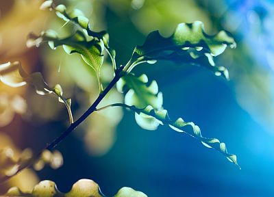 light, nature, macro, dreamy, depth of field - random desktop wallpaper