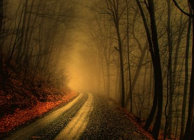 trees, autumn, forests, paths, fog, mist, roads - desktop wallpaper