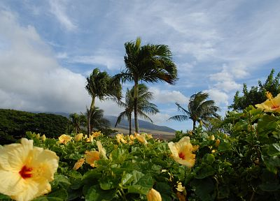 clouds, landscapes, nature, trees, planets, hibiscus, yellow flowers - desktop wallpaper